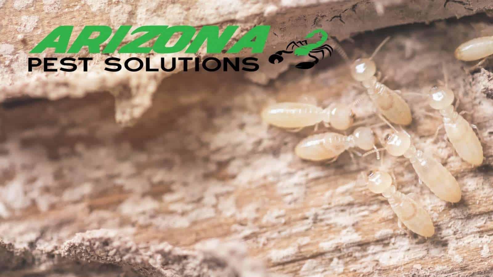 arizona pest solutions - gilbert termite control