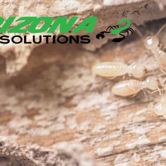 arizona pest solutions - gilbert termite control