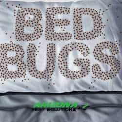 bed bug services - arizona pest solutions gilbert az