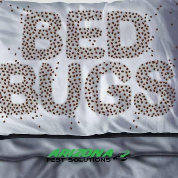 bed bug services - arizona pest solutions gilbert az