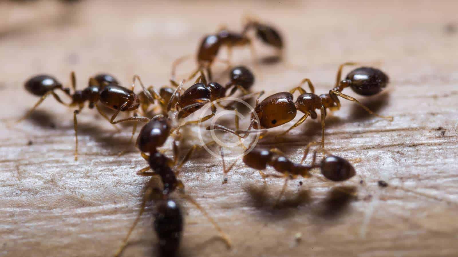 common pests in Queen Valley arizona