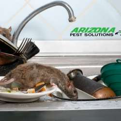 rodent control - arizona pest solutions gilbert az