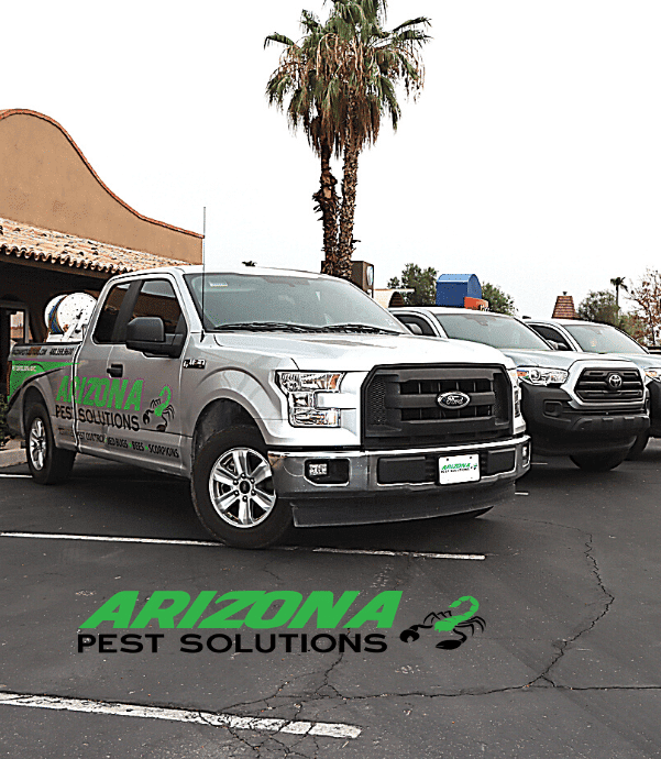 commercial pest control services Arizona Pest Solutions